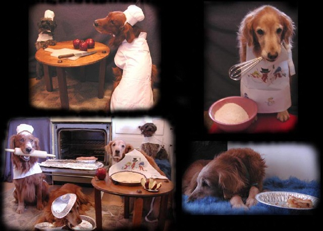 Canine Pastry chefs